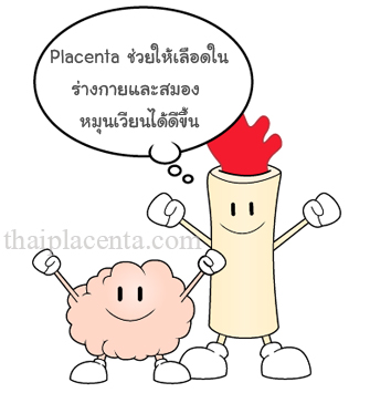 Placentaช่วยให้เลือดในร่างกายและสมอง หมุนเวียนได้ดีขึ้น